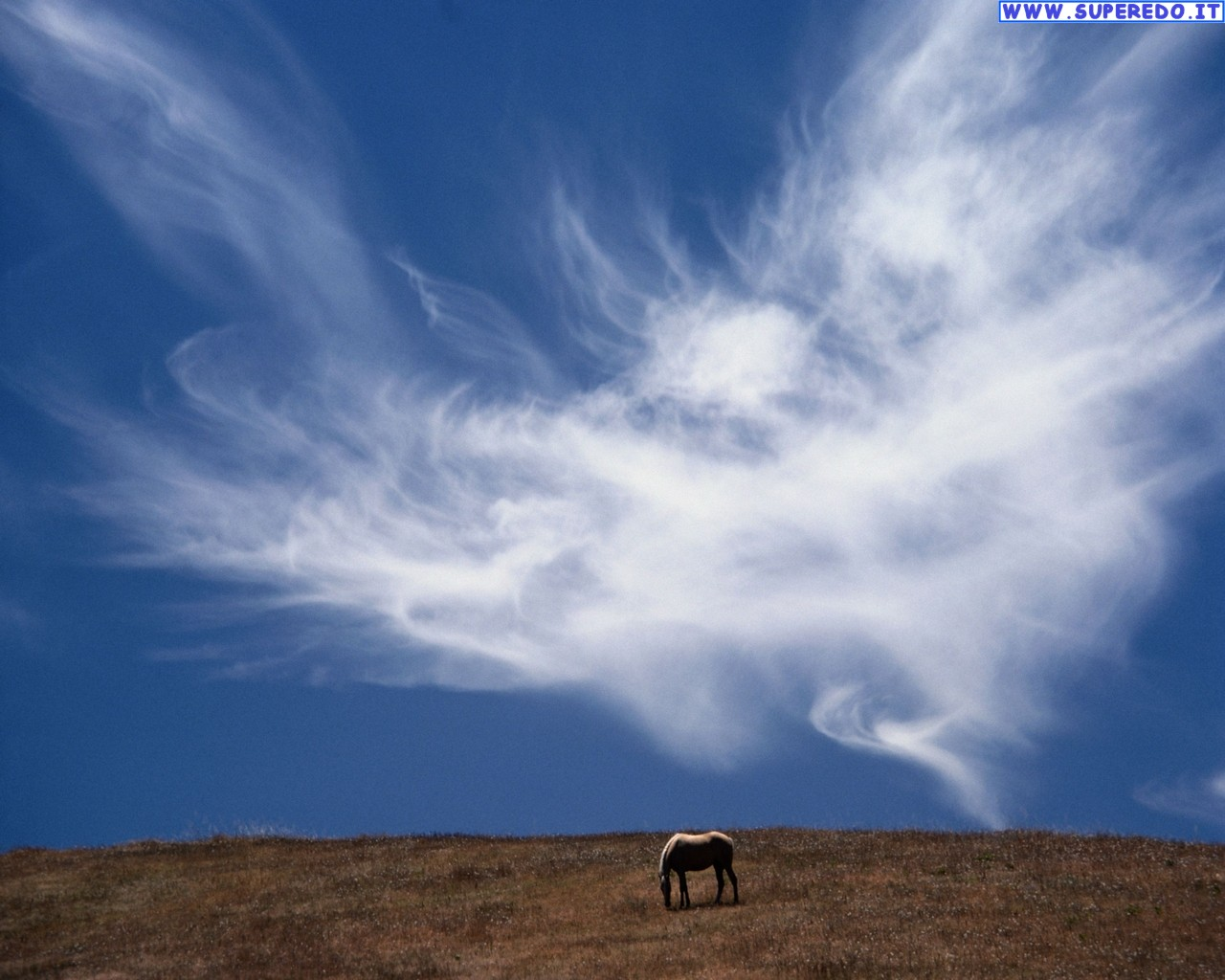 10-nuvola-angelo-segno-divino-natura